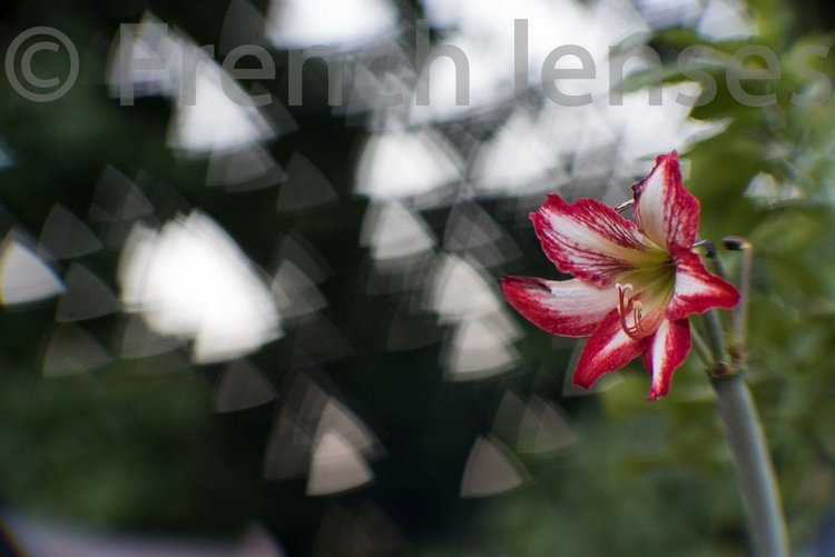 triangular-bokeh-lens.jpg.optimal